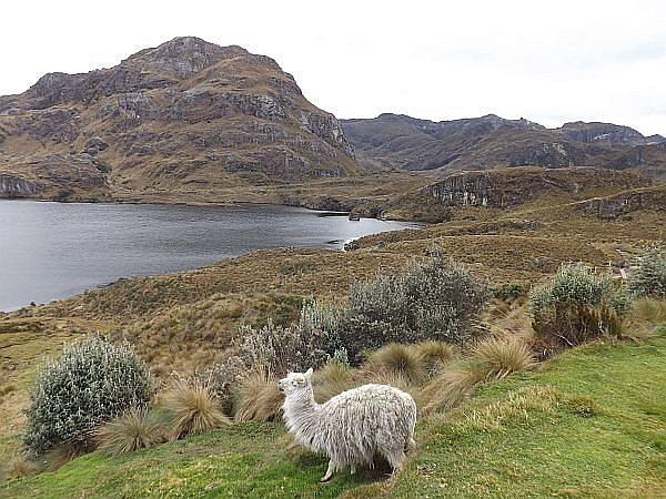 Las Cajas National Park in Ecuador