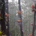 La Trinidad cloudforest