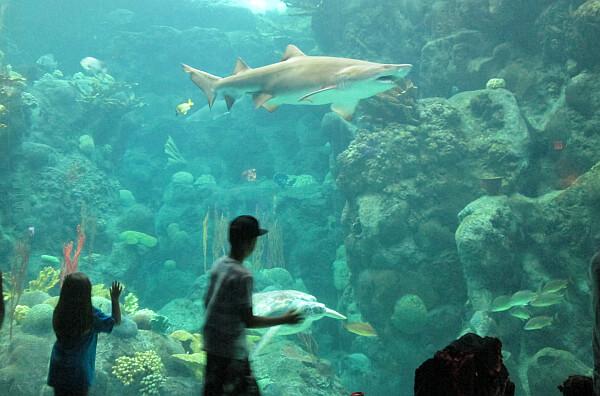 Tampa Citypass Aquarium