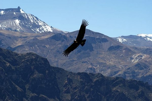 Colca Canyon of Peru