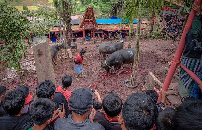 Tanah Torajah Sulawesi travel story