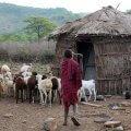 Maasai village travel story