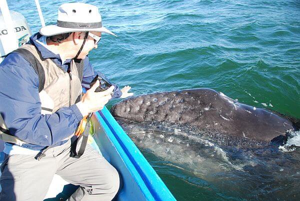 whale watching San Ignacio Lagoon Baja Mexico