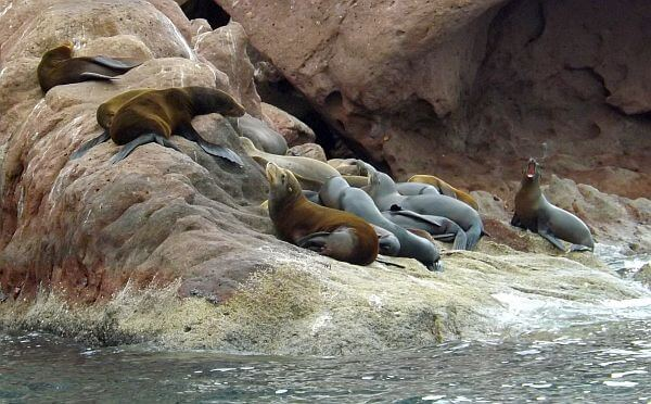 Baja sea lions adventure Espiritu Santo Island