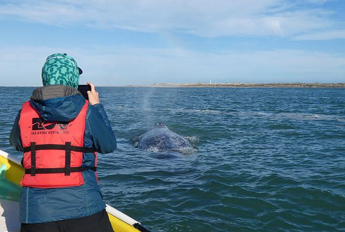 whale watching in Baja