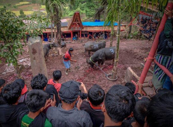 Dark tourism in Sulawesi Indonesia