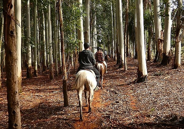 tour of South America horseback riding
