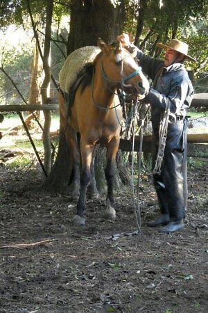 gaucho with a horse at an estancia in Uruguay, on a travel tour with Intrepid